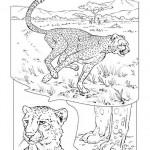cheetah-t3051