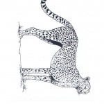 cheetah tekening