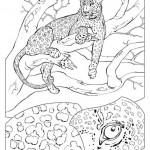 luipaard-t3069